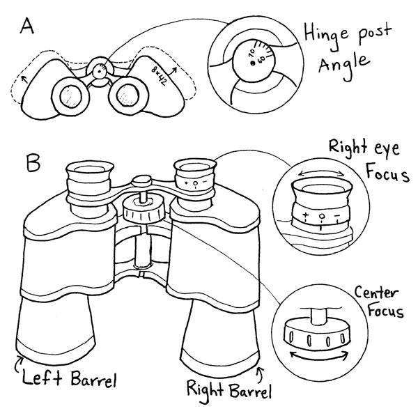 NatureMapping Activities - Using Binoculars/Monoculars.