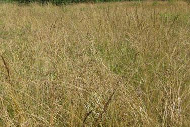 naturemapping habitat undisturbed grassland. Black Bedroom Furniture Sets. Home Design Ideas