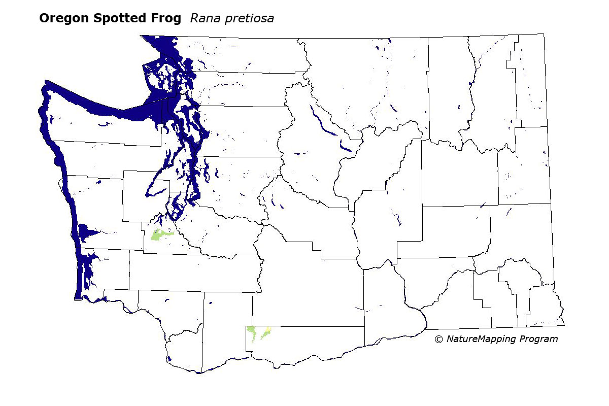 Distribution Map - Oregon Spotted Frog, Westside (Rana pretiosa)