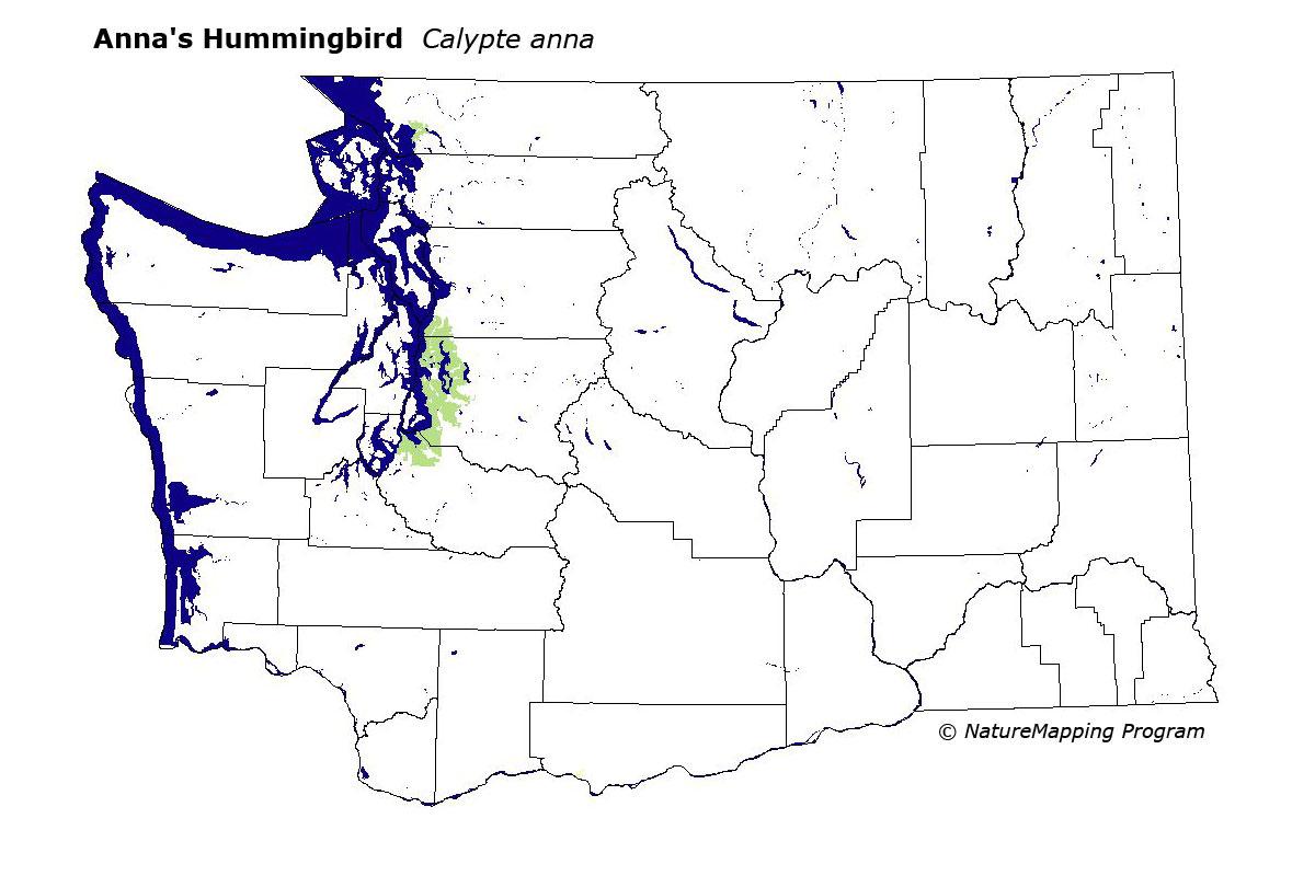 Distribution Map - Anna\'s Hummingbird (Calypte anna)