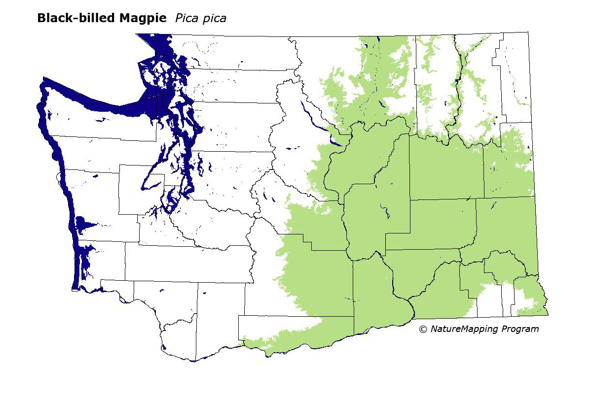 Distribution Map Black Billed Magpie Pica Pica
