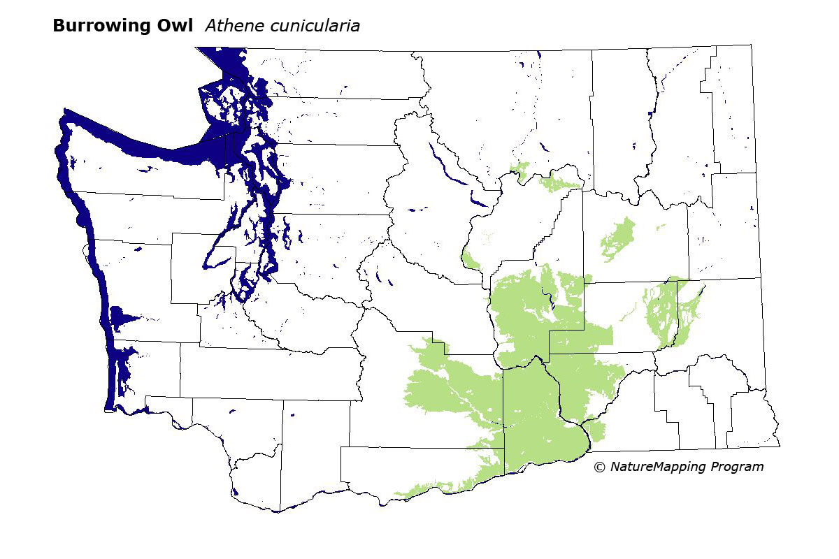 Burrowing owl habitat map - photo#12