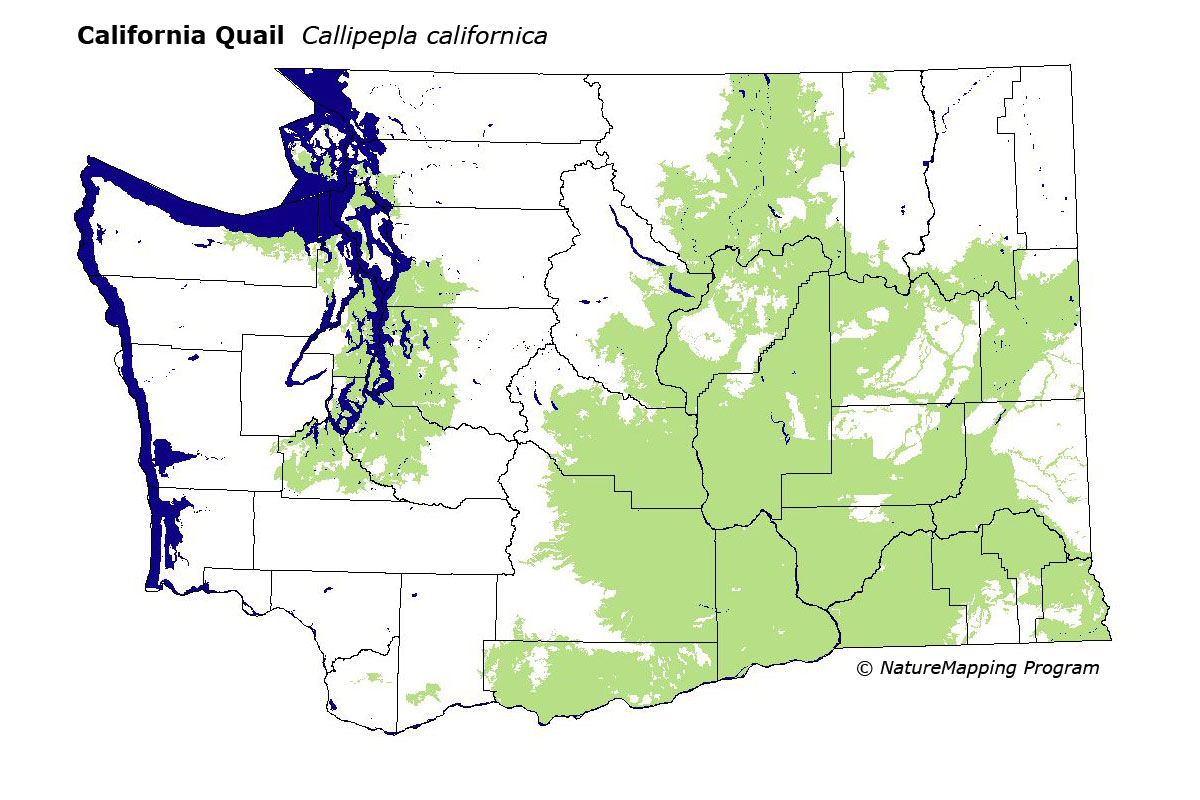 Distribution Map - California Quail (Callipepla californica) on map of washington state wine country, casino locations in washington state, map california to washington, map of washington state lakes, major highways in washington state, map of california and new zealand, map of washington state mineral, map of united states with capitals and national parks, map of california and san francisco, map of casinos in washington state, political map of washington state, map of california and france, map of washington roads state highways, map of northern washington state, reservations in washington state, map of california and canada, mileage map of washington state, road map western washington state, map of us states have death penalty, detailed map of washington state,