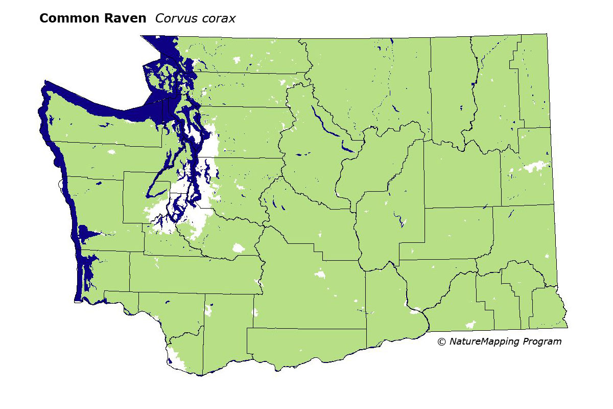 Common Raven Facts NatureMapping - Bird map of the us crows