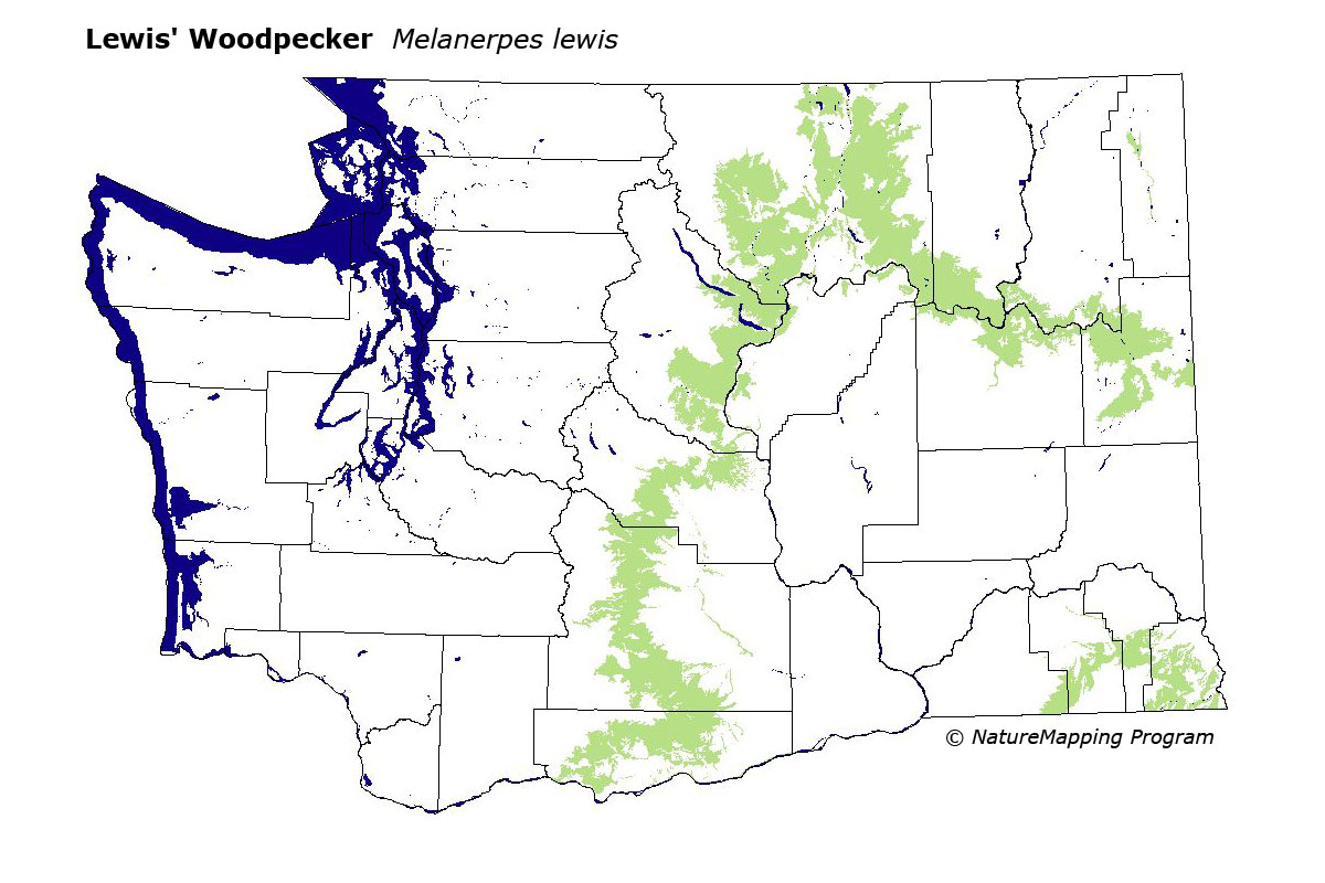 Lewis County Washington Map.Distribution Map Lewis Woodpecker Melanerpes Lewis
