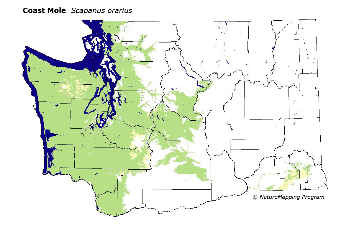 Distribution Map Coast Mole Scapanus Orarius - Map of washington coast