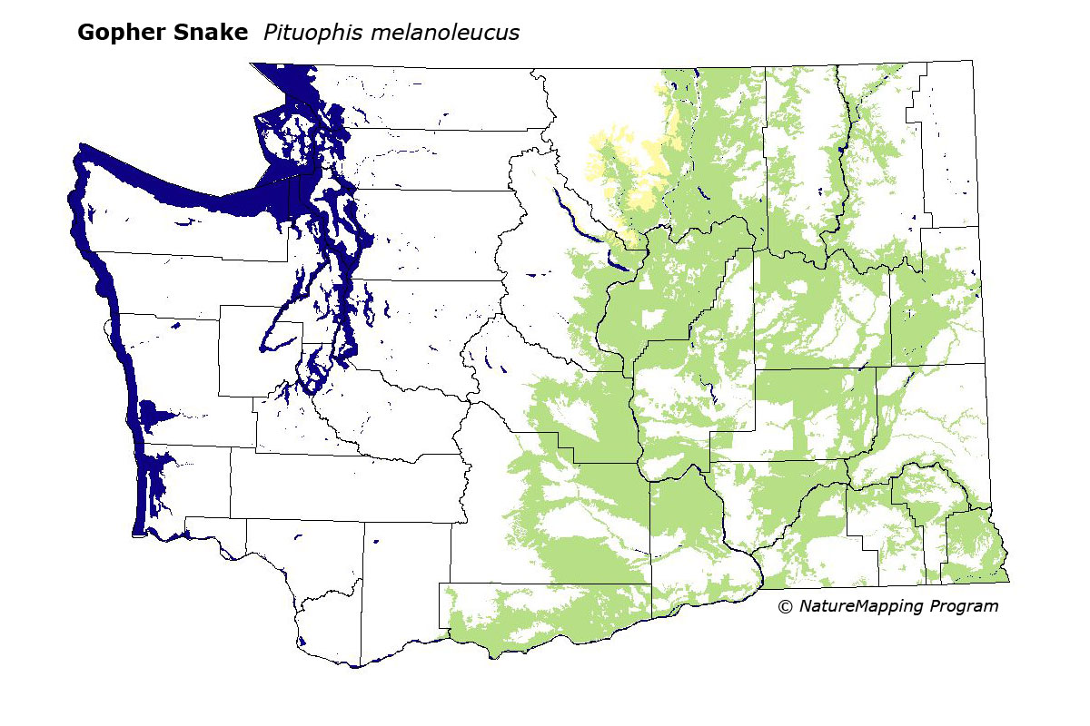 Distribution Map Gopher Snake Pituophis melanoleucus