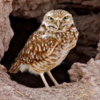 map southern florida with Burrowing Owl K6 on Why Is Florida So Humid together with About Us as well Black Book Miami Travel Guide additionally Watch in addition Miami Us Fl Miami.