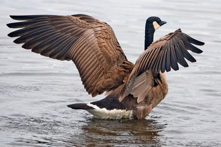 ¿Qué aves migran hacia el sur? | Reference.com