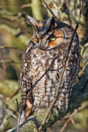 owl photo by Tim Knight