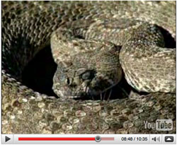 Rattlesnake Research Video